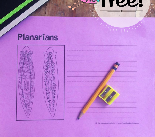 Flatworms Notebooking Pages FREE from The Notebooking Fairy