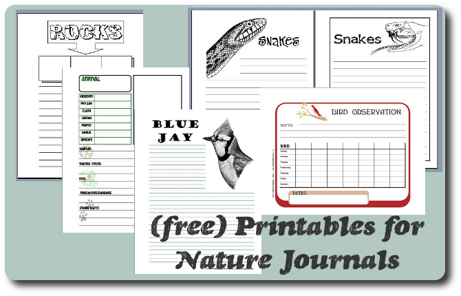 photograph about Printable Notebooks called Notebooking within Mother nature Scientific tests Notebooking Fairy