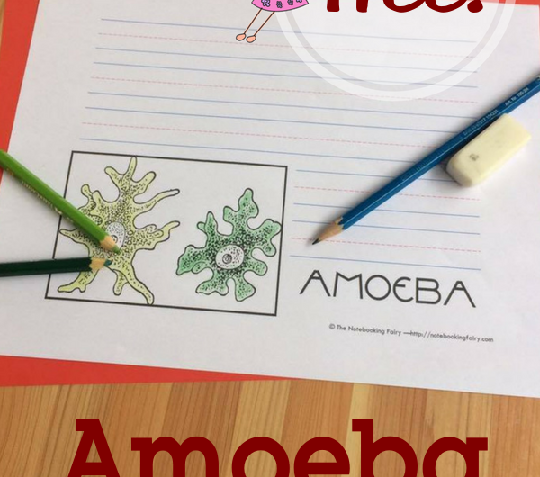 Amoeba Notebooking Pages FREE from the Notebooking Fairy