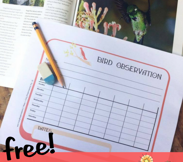 Bird Observation Notebooking Pages FREE from the Notebooking Fairy
