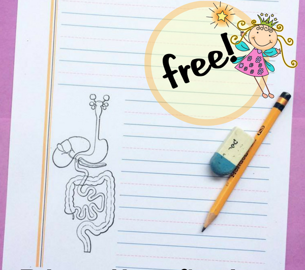 FREE Digestive System Notebooking Pages from the Notebooking Fairy